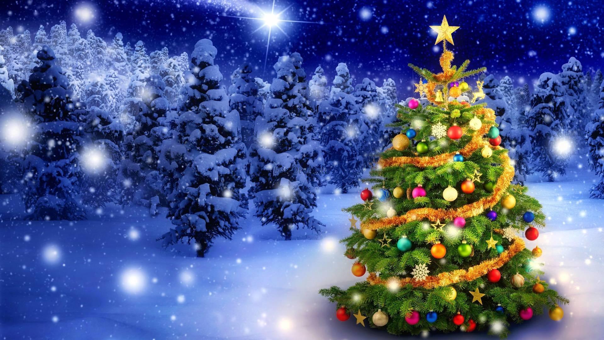 7 советов по выбору новогодней елки